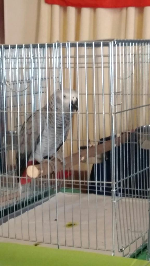 Спонсори виставки Zooсвіт 2015 – Виставка декоративних птахів та тварин, Київ, 2015